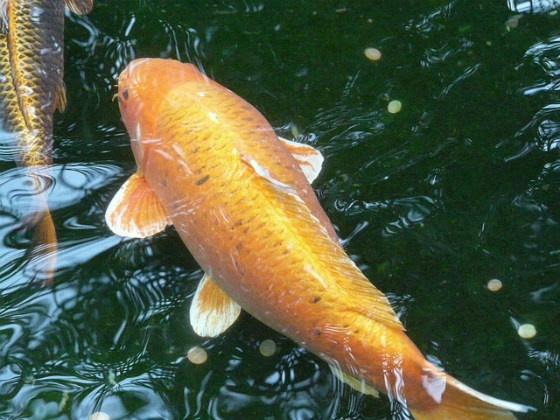 A wet fish.