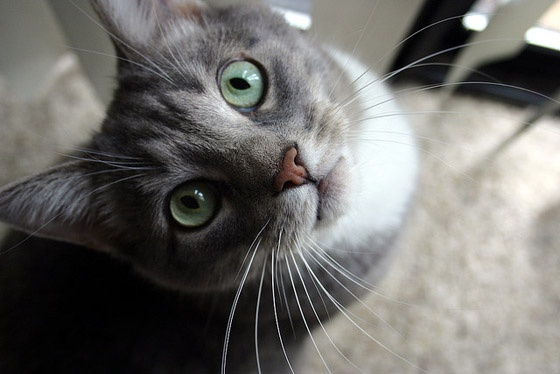 Whiskers.