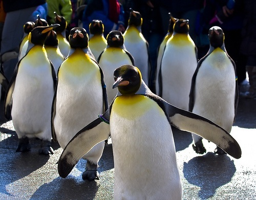 Penguins. Lots of penguins.