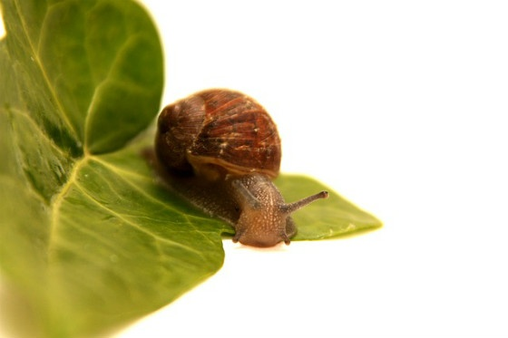 Snail on leaf.