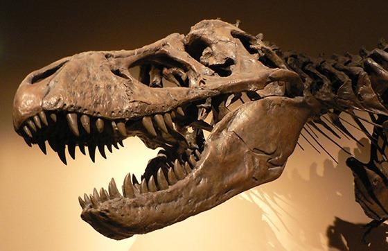 A dinosaur skeleton.