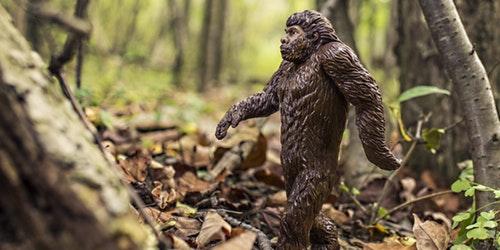 nature-walking-animal-strong