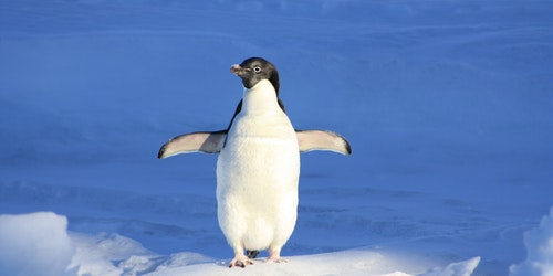 SEO News Roundup: Google's Penguin Is Swimming On Autopilot