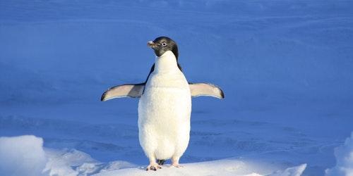 SEO News Roundup: Google's Penguin Is Swimming On Autopilot