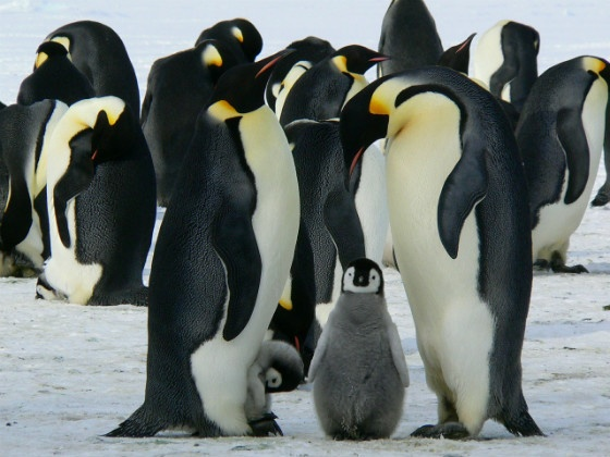 SEO News Roundup: Widget Warnings and Possible Penguins Keep SEOs on Their Toes